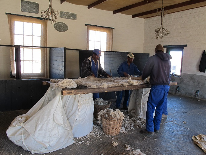 Sheep Shearing sorting