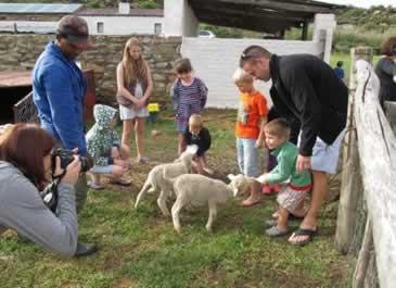 Ganora lambs