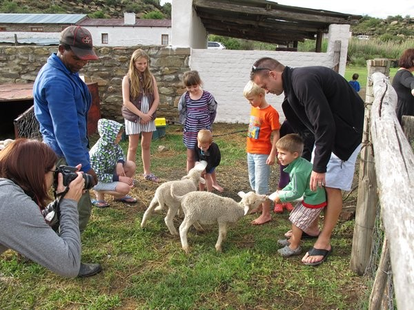 Children Feeding Lambs 2