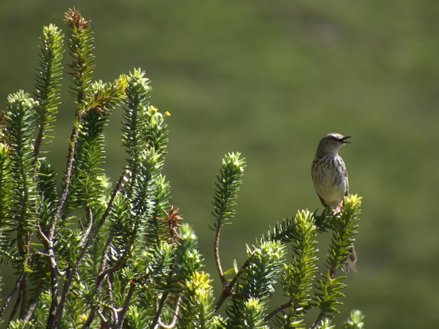 Karoo Prinia at Ganora Guestfarm
