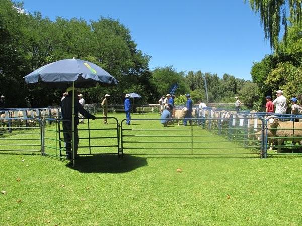 Dohne Merino Farm Sale 7