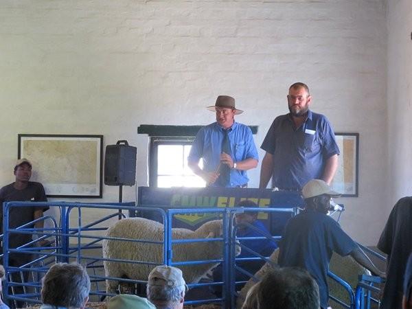Dohne Merino Farm Sale 5