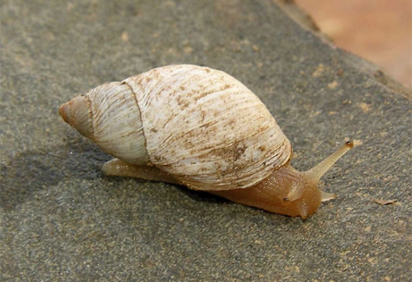 Land Snail Riddle at Ganorra Guestfarm