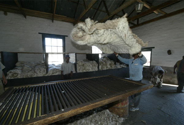 Sheep Shearing at Ganora Guestfarm