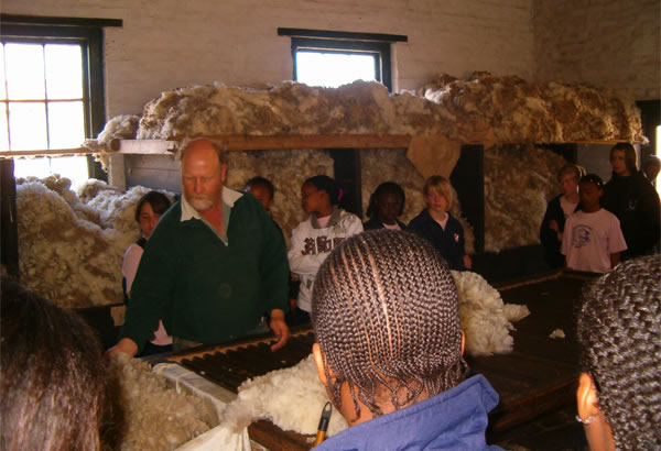 Sheep Shearing at Ganora